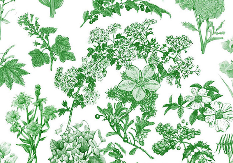 flora-cepillos-1