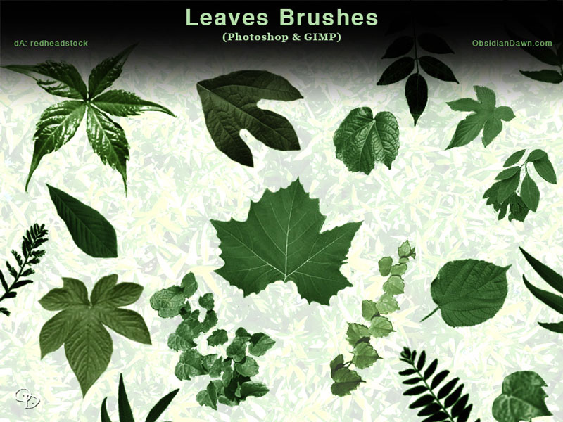 leaves_photoshop_and_gimp_brushes_by_redheadstock-d65kze